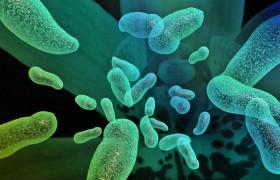 Пробиотики смогут вылечить депрессию