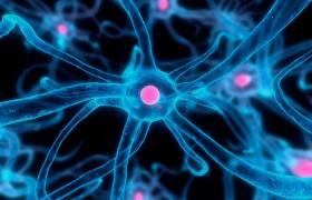 Нервные клетки могут восстанавливаться