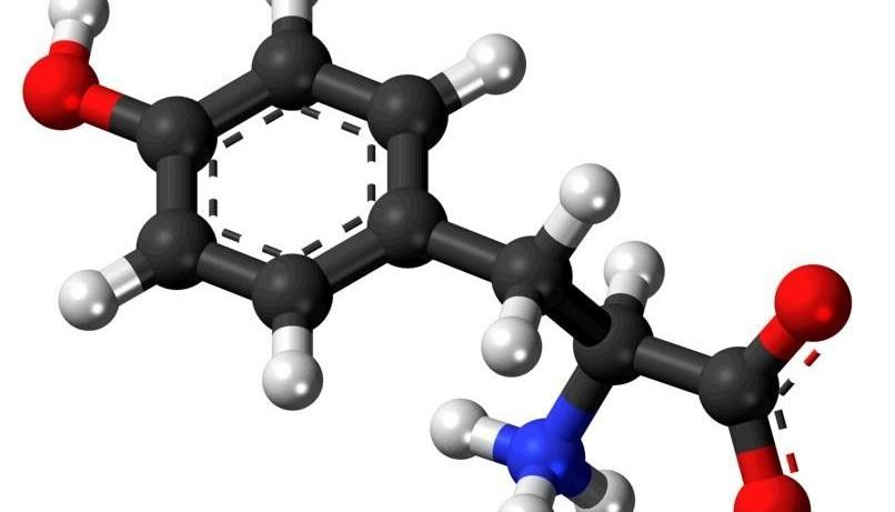 L-Тирозин защитит щитовидку и нервы