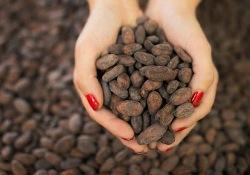 Какао поможет избежать деменции пожилым людям