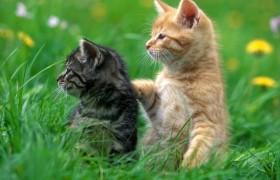 Кошачья терапия способна вылечить стресс