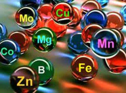 Ученые научились определять характер человека по наличию металлов в организме человека
