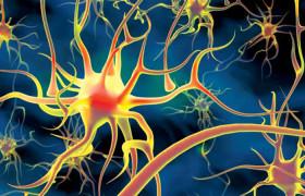 Основные причины нарушения деятельности нервной системы