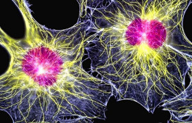 Стволовые клетки ускорят восстановление после травмы спинного мозга