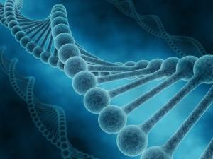 Генные мутации могут стать причиной шизофрении