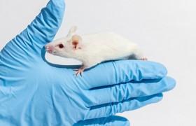 Лекарство от болезни Альцгеймера будут тестировать на мышах