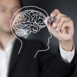 Ученые обнаружили механизм формирования извилин в головном мозге