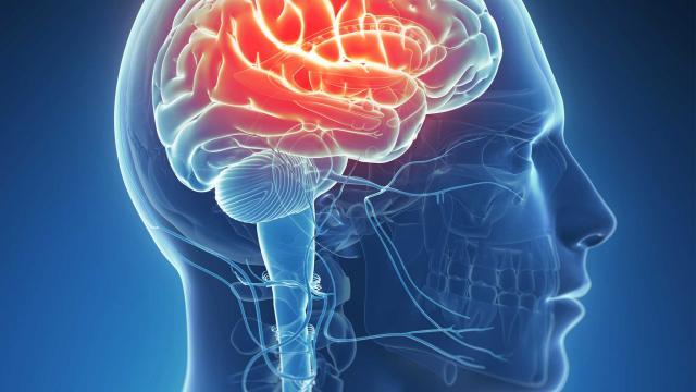 Смола хвойных деревьев  поможет вылечить эпилепсию