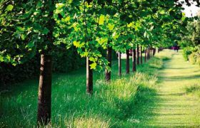 Зеленые насаждения благотворно сказываются на психическом здоровье