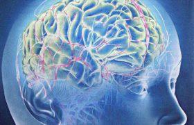 Гестационная гипотироксинемия увеличивает риск развития шизофрении у ребенка