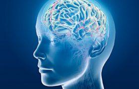 Соевые продукты увеличивают риск возникновения необратимых изменений в мозге