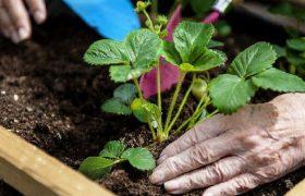 Прогулки по саду способствуют профилактики болезни Альцгеймера