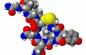 Окситоцин поможет вылечить тревогу