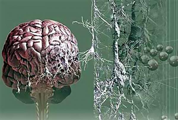 Ягоды черники могут помочь снизить риск развития болезни Альцгеймера