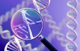 Найден один из генов аутизма, снижающий активность мозга