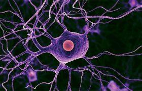 Ученые нашли препарат для восстановления нервных клеток после травмы