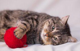 Справиться с психическими расстройствами помогают домашние животные