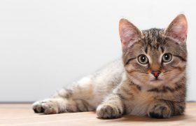 Кошка в доме может привести к шизофрении и самоубийству