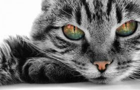 Любители кошек рискуют стать шизофрениками