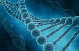 Генетическая основа шизофрении