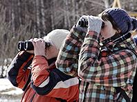 Открытие: наблюдать за птицами полезно для психики