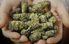 Израиль сделал ставку на медицинскую марихуану
