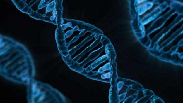 «Некодирующая» ДНК на самом деле отвечает за неврологические нарушения