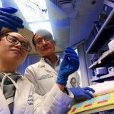 Ученые предложили новый подход к лечению шизофрении