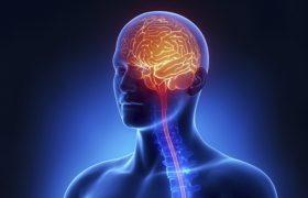 Алкоголь изменяет экспрессию генов в центральной нервной системе