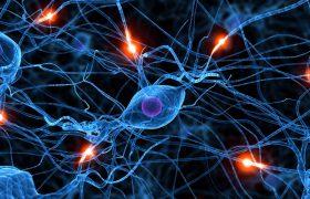Все дело в правильном виде спорта: как восстановить нервные клетки за 40 минут