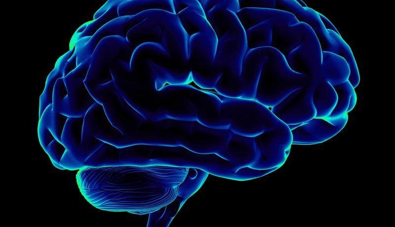 Размер мозжечка и риск развития шизофрении связаны