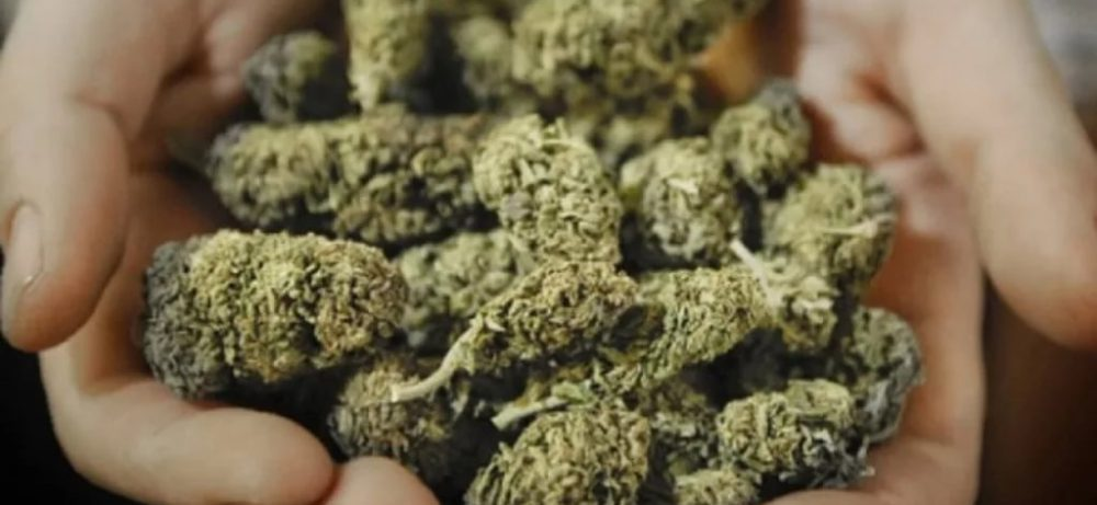 В аптеках Уругвая будут отпускать марихуану всем желающим