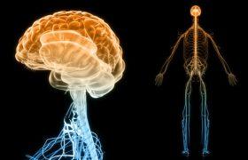 Лечение избыточного веса повреждает нервы