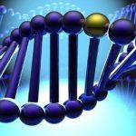 Обнаружена сеть из 320 генов, отвечающих за возникновение эпилепсии