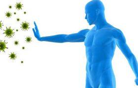 Иммунная система человека. Друг или враг