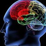 Обнаружена молекула, отвечающая за шизофрению