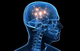 В мозгу нашли «систему раннего оповещения»