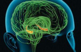 Возникновение признаков болезни Альцгеймера зависит от размера гиппокампа
