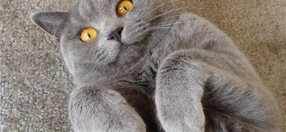 Стресс: заведите кошку