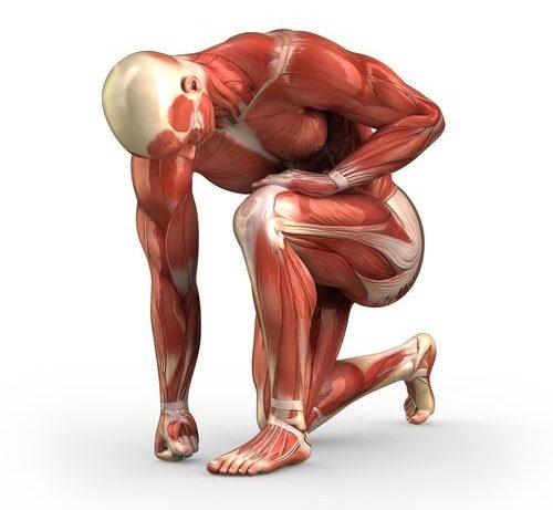Поражения мышц на фоне приема статинов