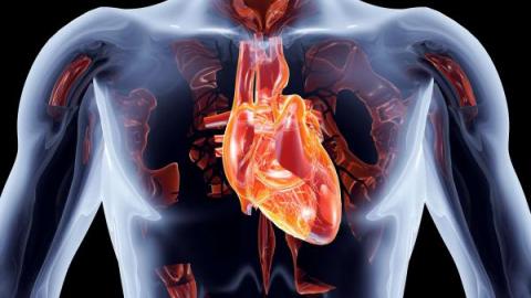 Пролапс митрального (двустворчатого) клапана