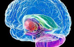 Синдром расщепленного мозга при поражении мозолистого тела