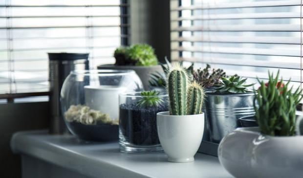 Некоторые комнатные растения выделяют опасные для здоровья человека вещества