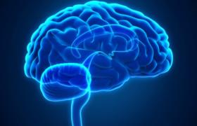 Ученые рассказали о влиянии на мозг многозадачности