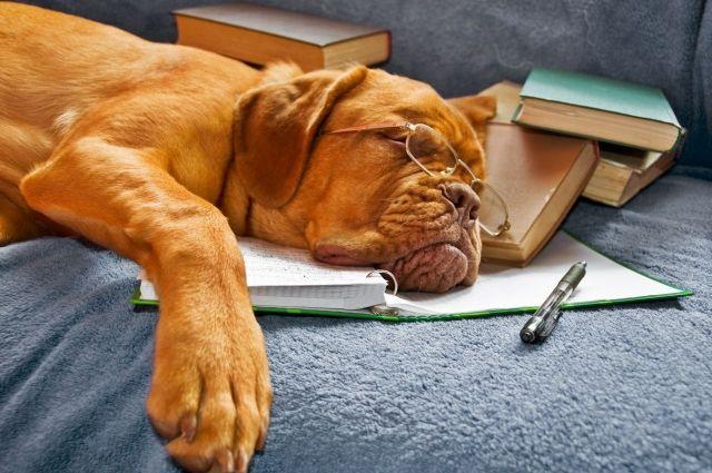 Уставшие весной: как побороть хроническую усталость и наслаждаться жизнью