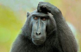 Мозги обезьян при наблюдении друг за другом синхронизируются