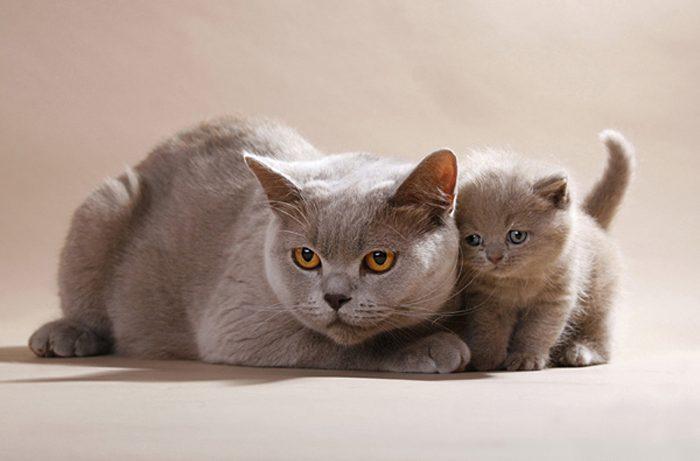 Заводим котенка в доме, в котором есть ребенок