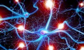 В мозгах умных людей оказалось меньше связей нейронов