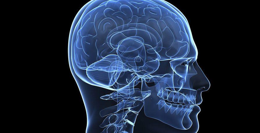 Даже слабый стресс провоцирует воспаление мозга у одиноких