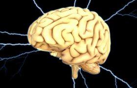 Учимся запоминать: мозг и память